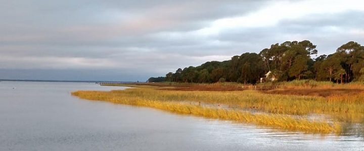 Apalachicola Bay Estuary Class October 4 @ 12:30 pm – 4:00 pm |Recurring Event  Free